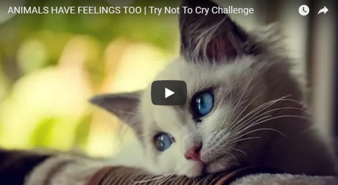 ANIMALS HAVE FEELINGS TOO | Try Not To Cry Challenge