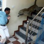 15 Scariest Animal Encounters You Need To See